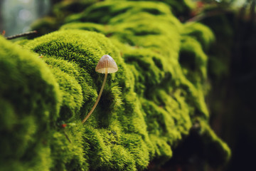 Mushroom in summer green forest