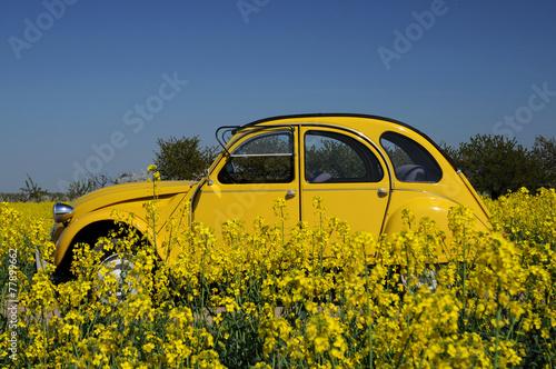 Plexiglas Vintage cars Rapsblüte