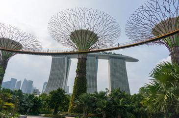 Super tree and Marina bay sands, Singapore