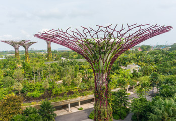 Super trees at the garden by the bay, Singapore