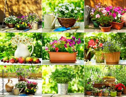 collage of summer flowers