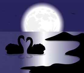 silhouette di cigni sul lago