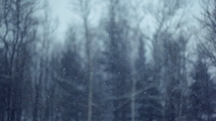 Focus on fast snow, blury winter forest in background