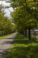 Rural road lined with leafy green trees