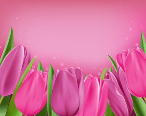 Realistic Colorful Tulips in Isolated Background