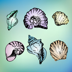 Hand drawn set of seashell on blurred background.