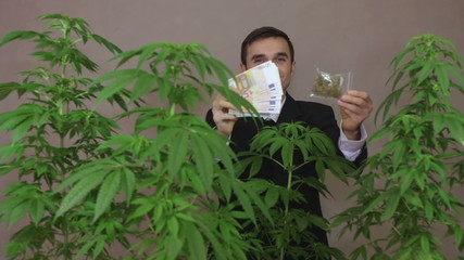 Successful business man with Marijuana