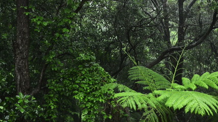 Lush green rainforest with heavy rain falling on the trees