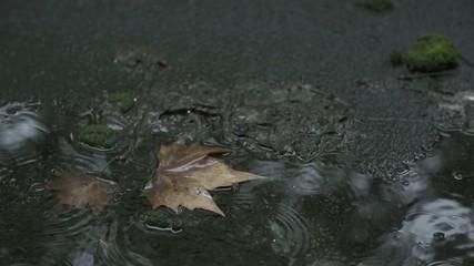 Regen im Park 03