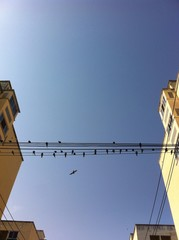 swallow on wire center building