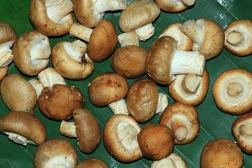 Pretty eat mushrooms
