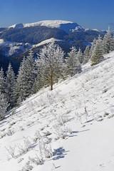 Winter on a hillside.