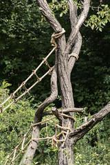 Ropes for tree climbing