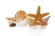 Seashells and starfish on white background - 77926628