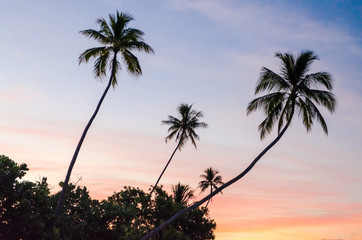 Tropical Sunset in Moorea, French Polynesia