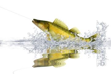 Fische 79