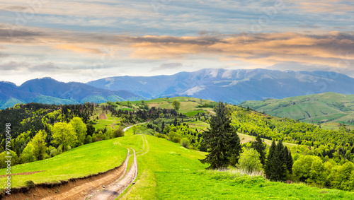 road through the meadow on hillside at sunrise © Pellinni