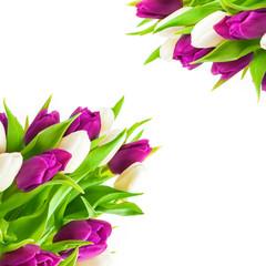 Tulpen, Grußkarte