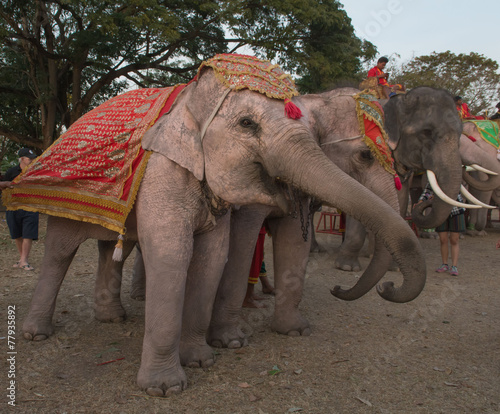 Секс слоны слоны
