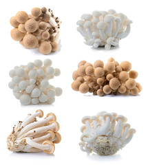 brown beech mushroom and white mushroom isolated on white backgr