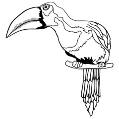 Outlined Toucan