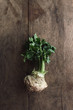 Celeriac with leaves, on wooden table