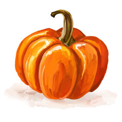 Pumpkin vector illustration  hand drawn  painted watercolor