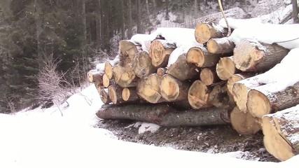 Logs pile in winter