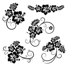 Set of hibiscus flourish decorative design elements