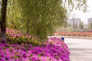 Blumengarten Yangzhou