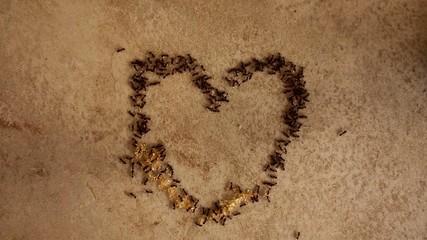 colony of ants bulding alove heart