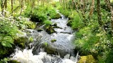 Flowing water of a river in a forest, forces of nature poster