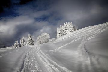 paysage blanc_hiver