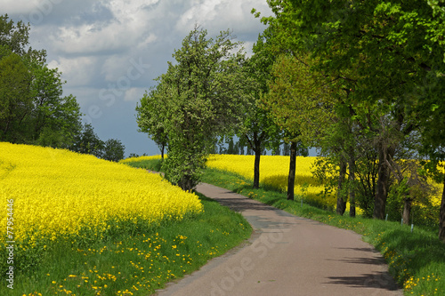 canvas print picture Der Weg