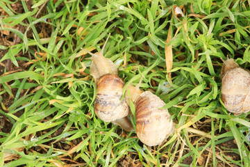 three snails on the grass