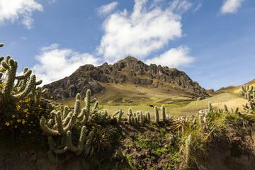 Picos de roca y cactus en Zumbahua, Ecuador