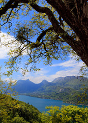 Tree on a background of Lake Annecy