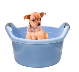 pet sitting in a washbasin