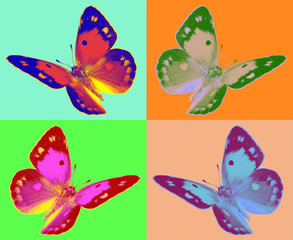 pop art Colias butterfly