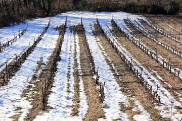 vignes et neige