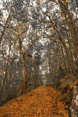 Camino ente Arboles del Bosque