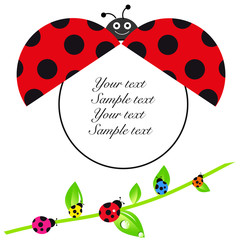 Ladybird baby shower greeting card with colorful ladybird vector