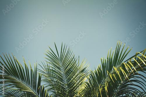 palm tree - 77960845