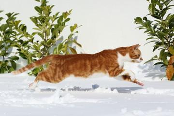 Katzensprung im Schnee