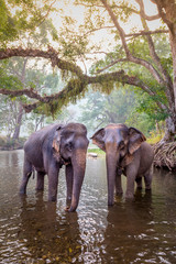 The elephants in Sangkhlaburi, Kanchanaburi, Thailand.