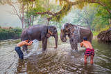 Fototapety mahouts bathe and clean the elephants in the the river