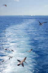 Seagulls flying and ships