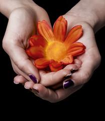 Female hands holding red flower