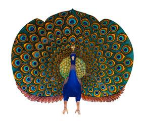 Peacock statue