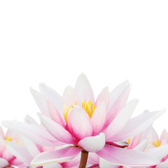 Lotus isolated